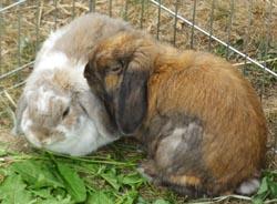 Furnishing Your Rabbit Condo