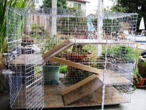 Robin's bunny condo