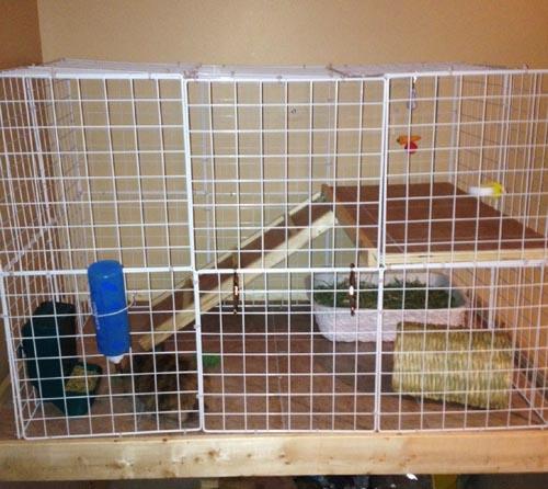 Reese's new bunny condo