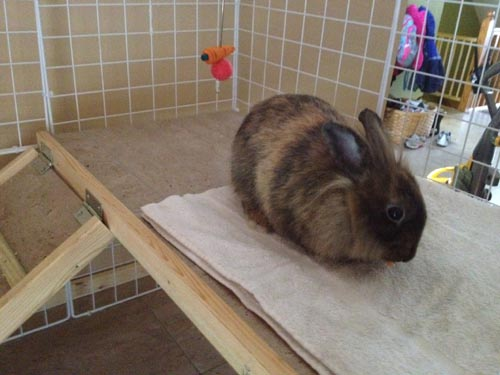 Reese in his new bunny condo